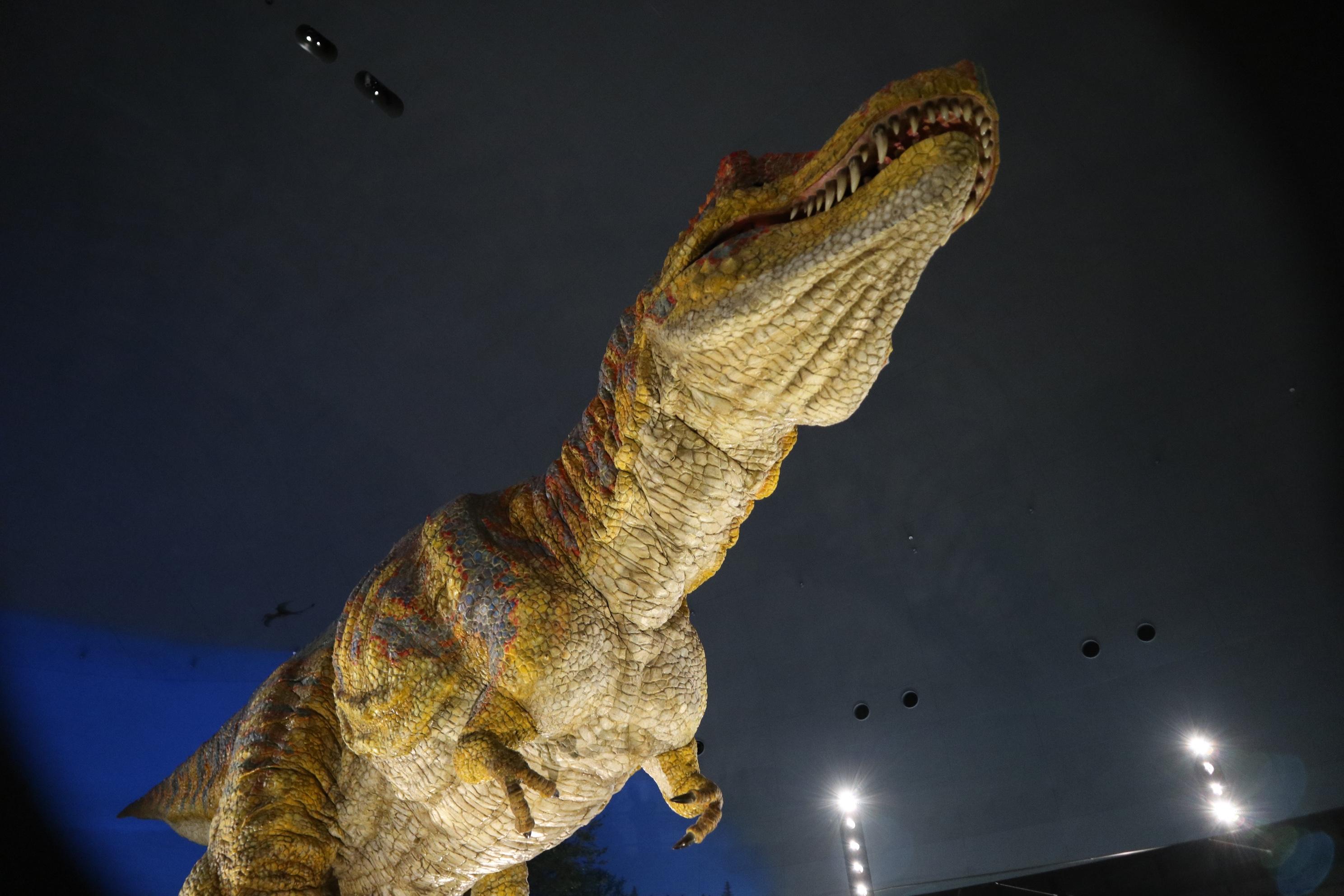 恐竜博物館 館内4