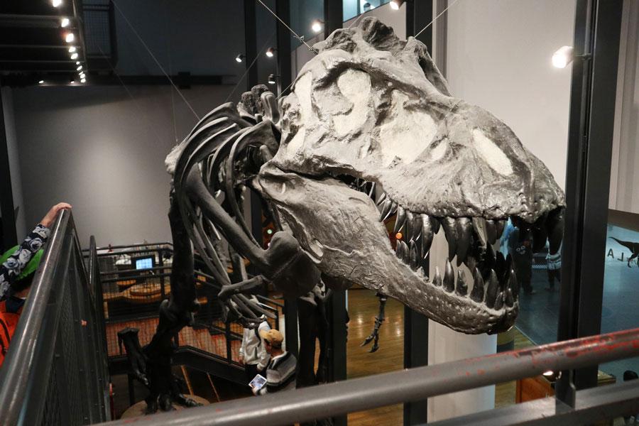 ィンターダイナソープロジェクト「化石見学」の様子