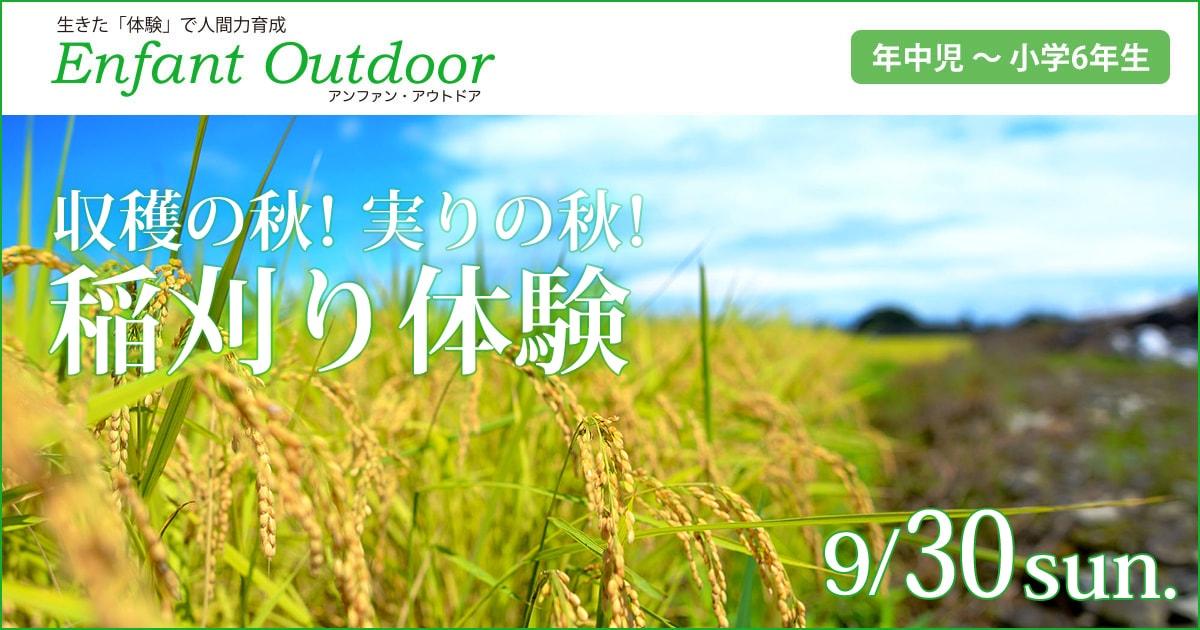 収穫の秋!実りの秋!「稲刈り体験」